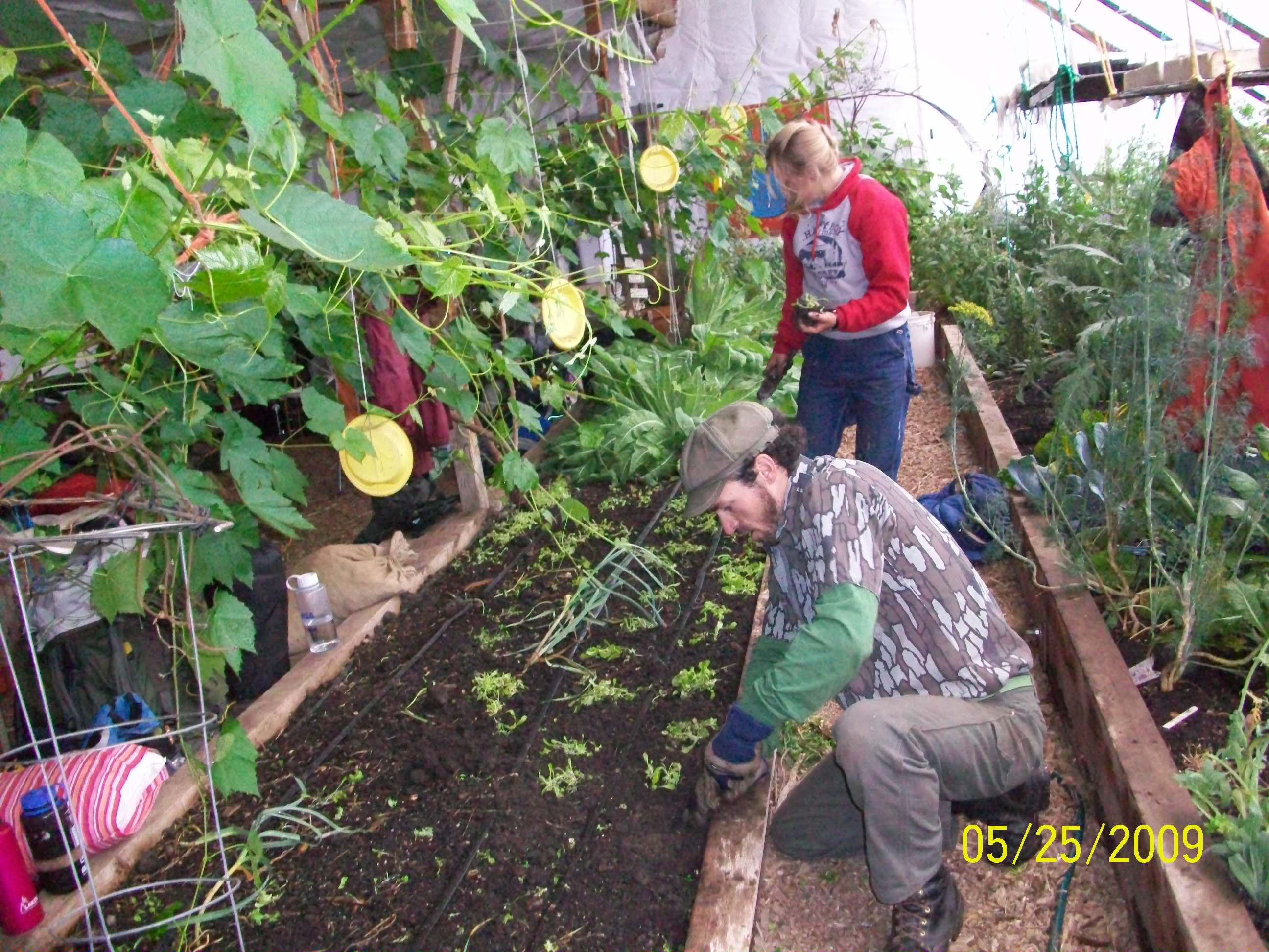 teaching sustainability as if your life depended on it a photo transplanting
